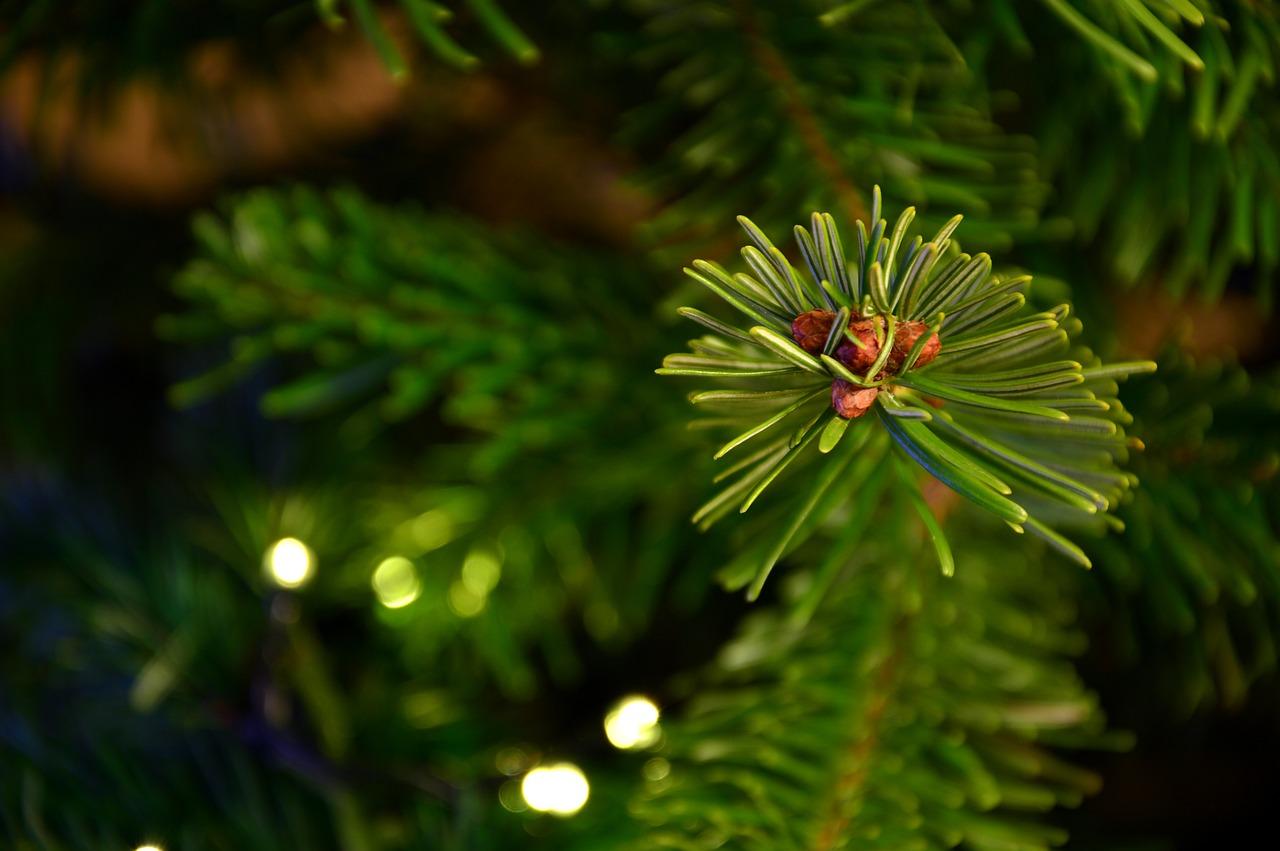 Tips och råd för julgranen!